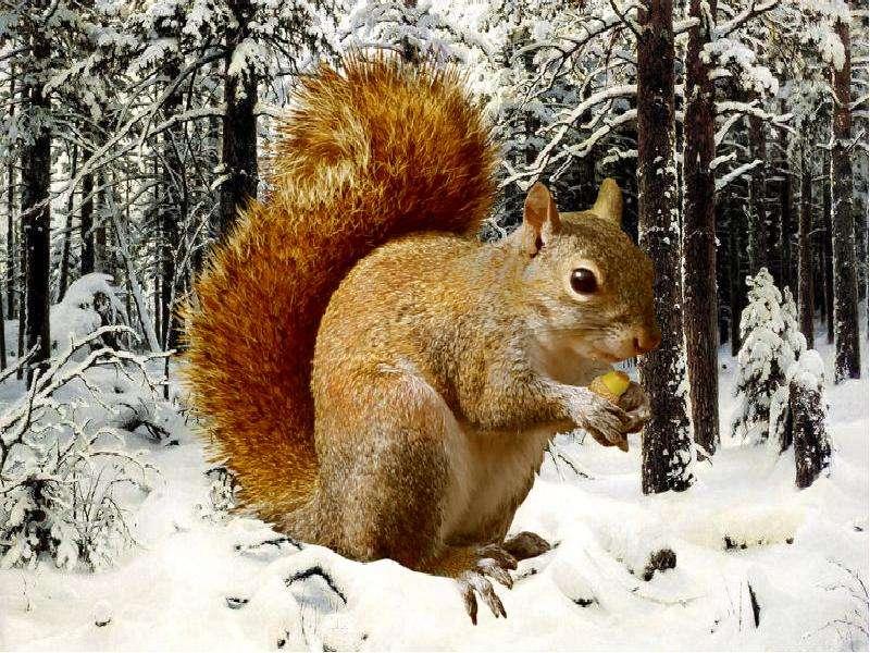 Зима животные картинки для детей
