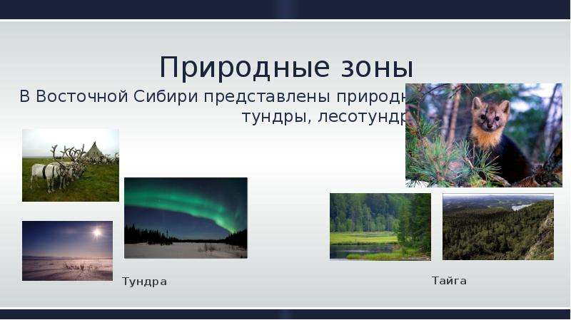Природные зоны В Восточной Сибири представлены природные зоны тундры, лесотундры и тайги .