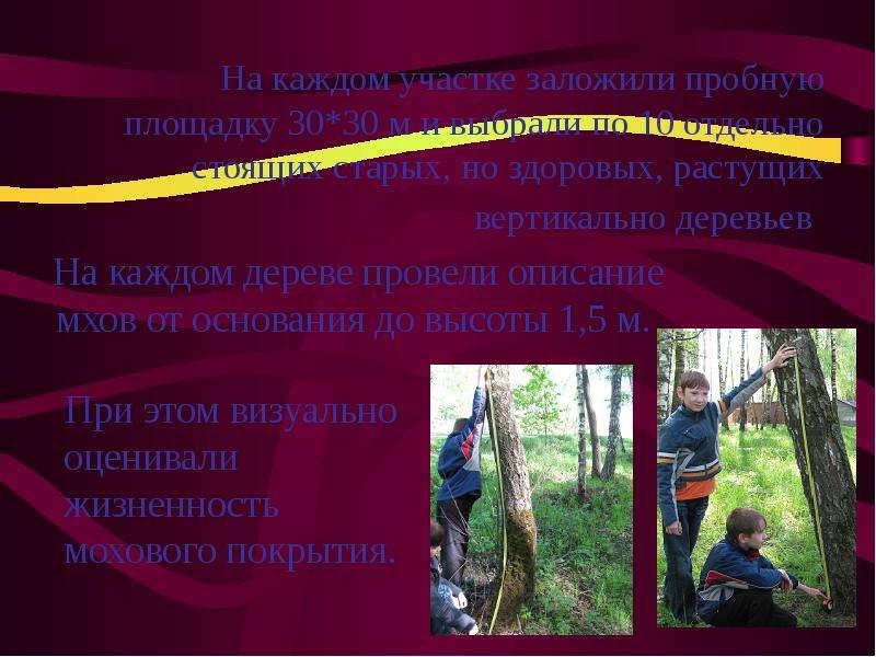На каждом дереве провели описание мхов от основания до высоты 1,5 м. На каждом дереве провели описан