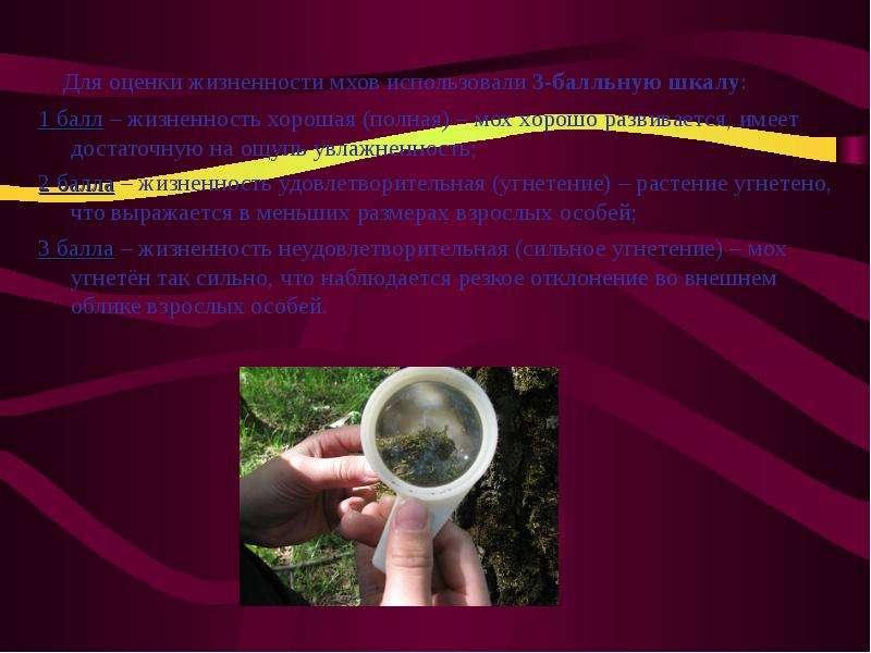 Для оценки жизненности мхов использовали 3-балльную шкалу: Для оценки жизненности мхов использовали