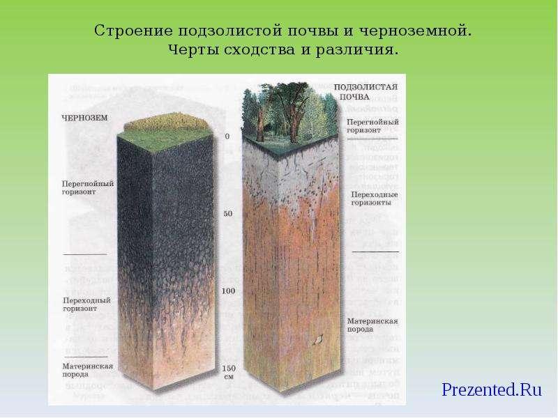 Как сделать плодородную почву из глинистой 122
