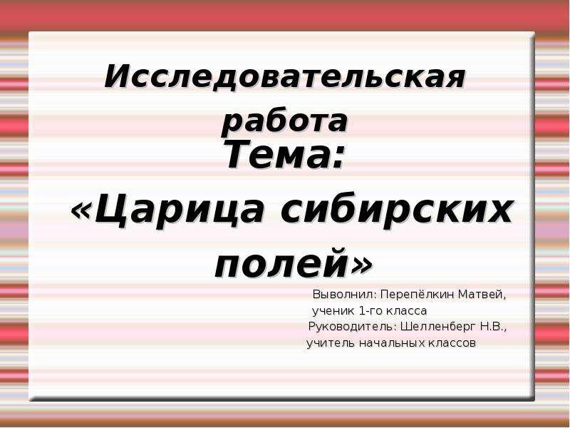 Презентация Исследовательская работа Тема: «Царица сибирских полей» Выволнил: Перепёлкин Матвей,