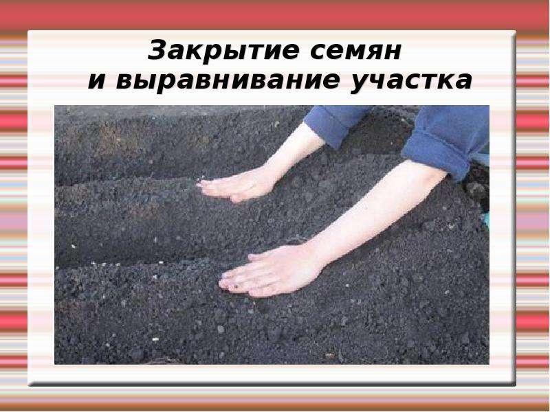 Закрытие семян и выравнивание участка
