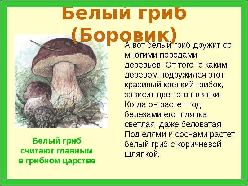 Белый гриб боровик описание