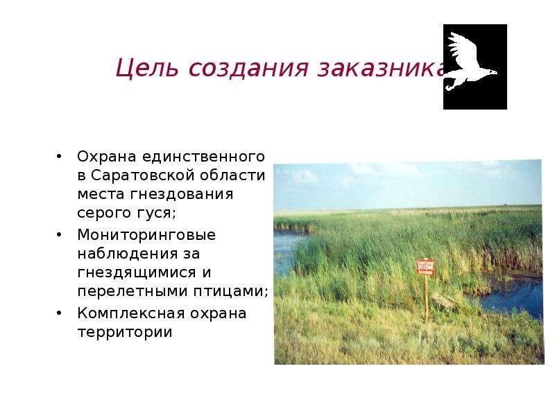 вместе покупками охрана водных ресурсов саратовской области магазин