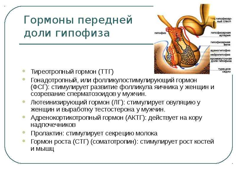 okazivaet-stimuliruyushee-deystvie-na-spermatozoidi