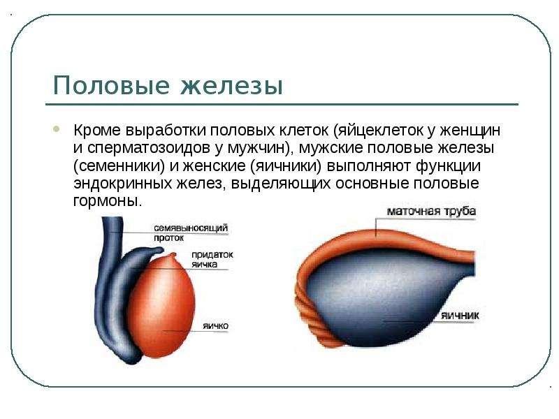 oshusheniya-zhenshini-ot-vibrosa-spermi