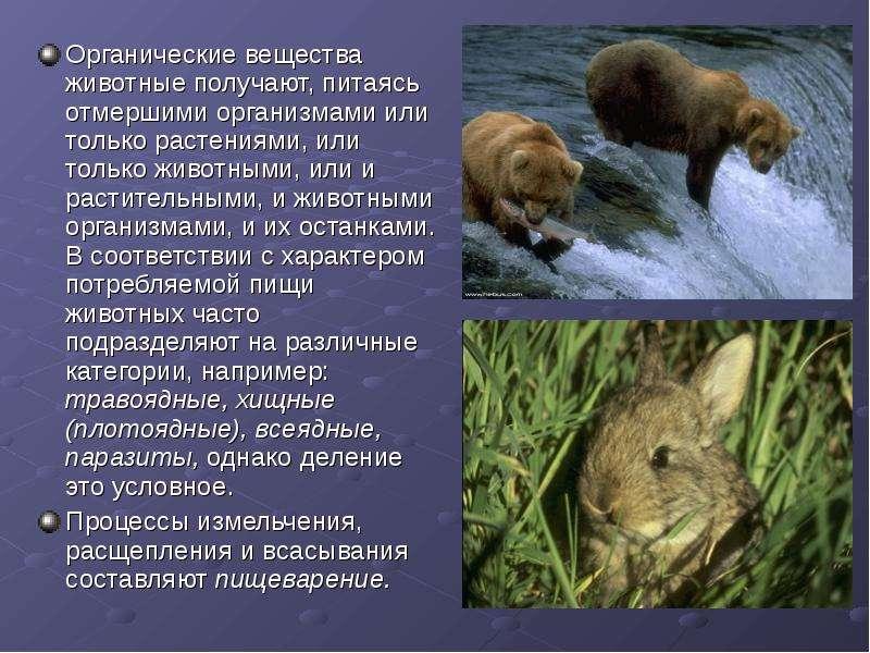 Органы пищеварения у животных
