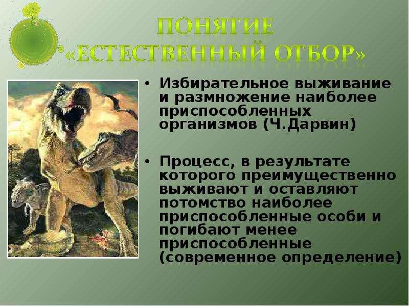 Основные движущие силы эволюции презентация — pic 14