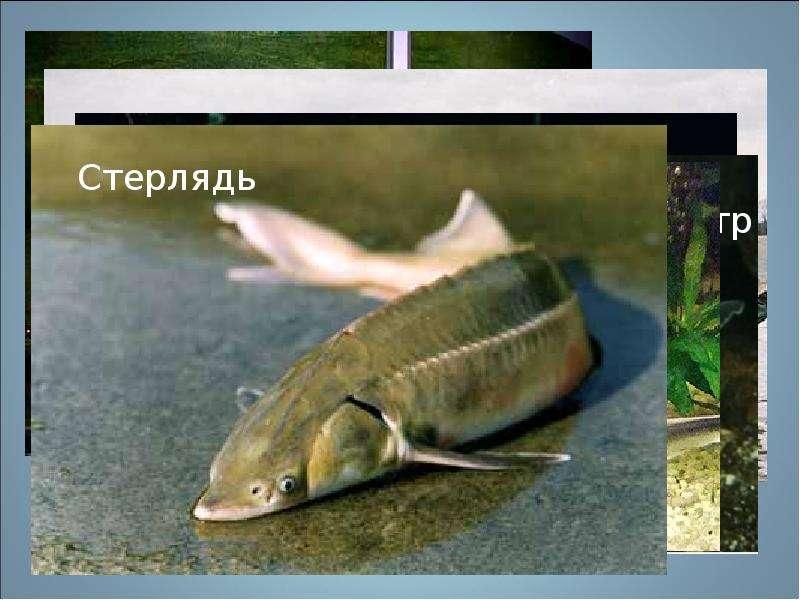 Скачать звук рыб