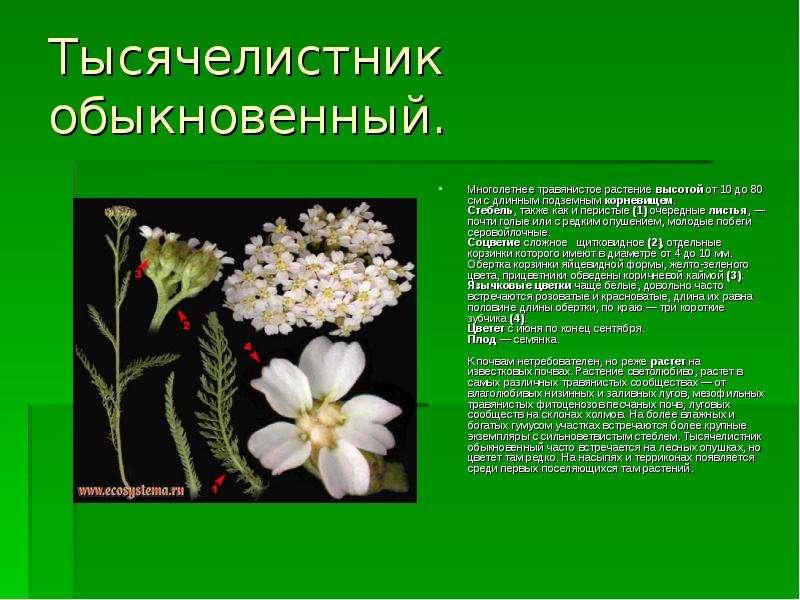 golaya-nyusha-i-ostalnie-pevitsi