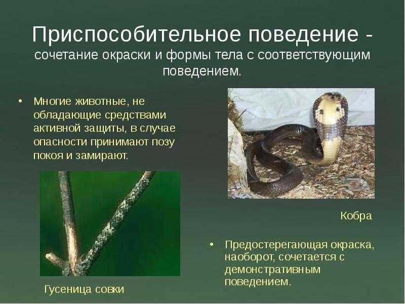 лекарство содержит сезонная миграция животных это пример проявления инстинктивного поведения курсах