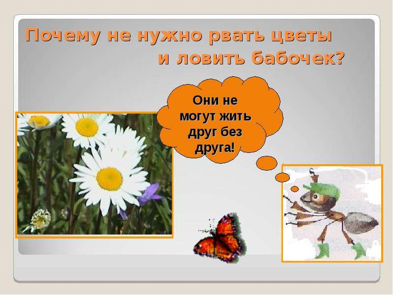 почему не нужно рвать цветы и ловить бабочек презентации