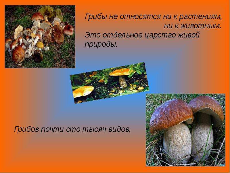 Царства органического мира бактерии грибы животные растения