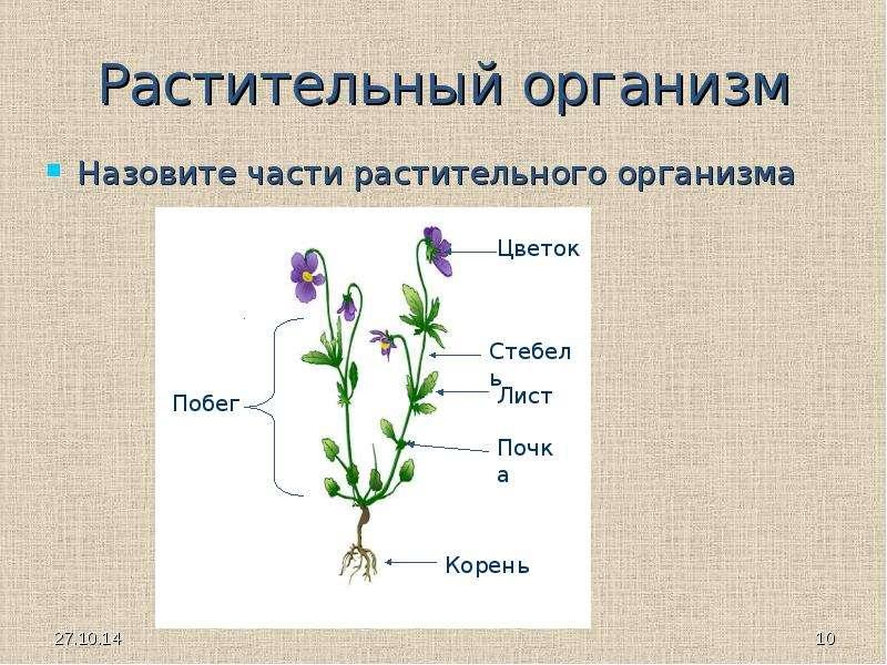 Почему растения считают живым организмом