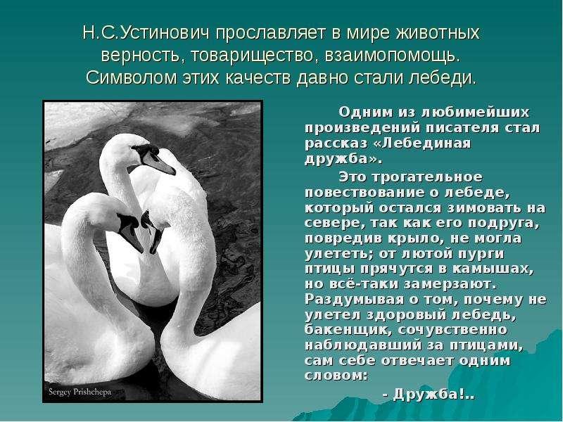 Н. С. Устинович прославляет в мире животных верность, товарищество, взаимопомощь. Символом этих каче