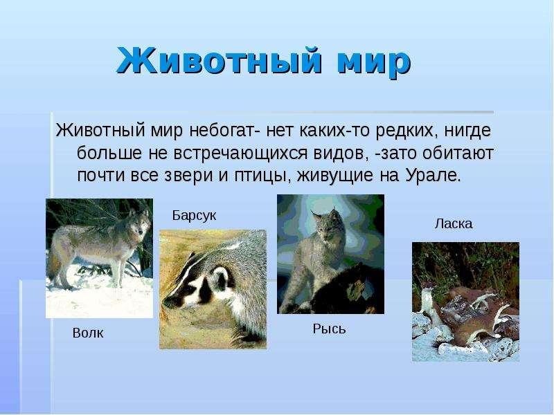 Животный мир Животный мир небогат- нет каких-то редких, нигде больше не встречающихся видов, -зато о