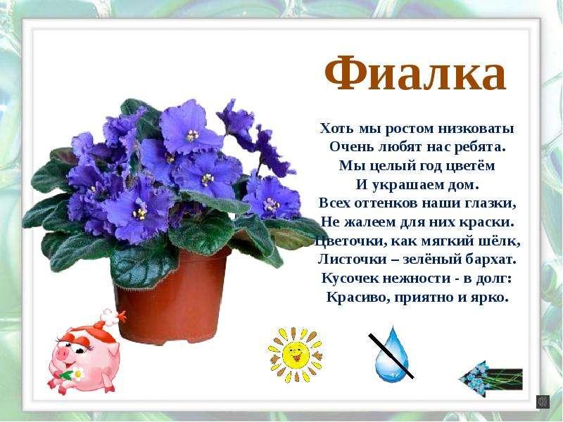 Стихи к подарку комнатный цветок 6