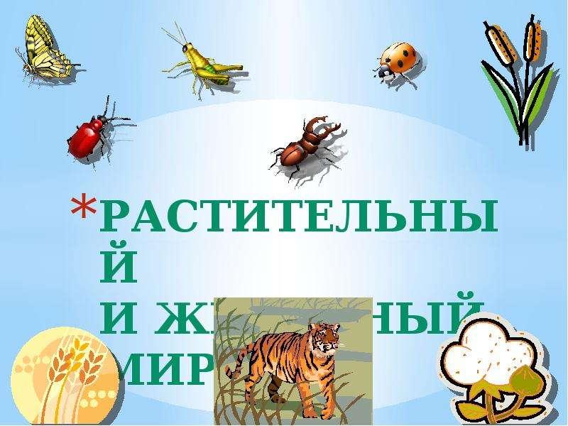 Презентация На тему Растительный и животный мир