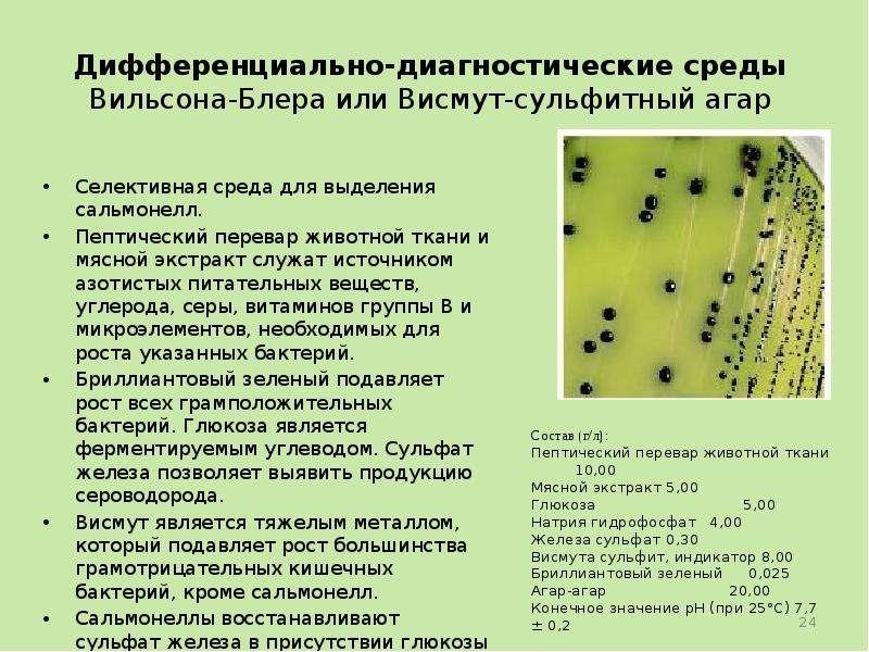 Как выращивать бактерии в домашних условиях 149