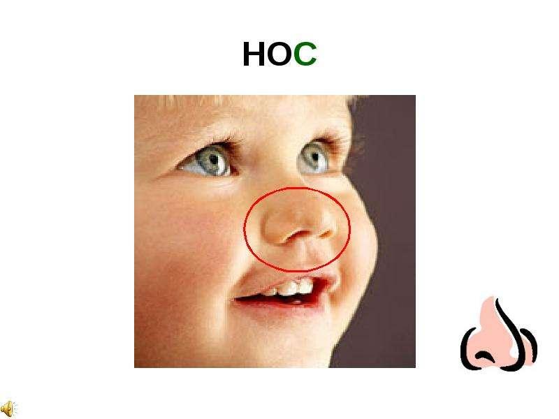 как обучить ребенка показвать глазки носик алфавиту