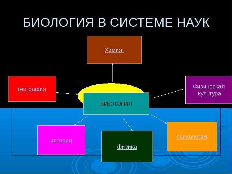 Предмет философии, ее место и роль в культуре научная ориентация философии структура философского знания