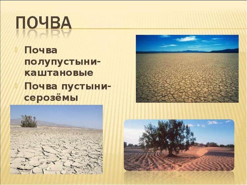 функциональное какая почва в пустыни и полупустыни сожалению, термобелье нельзя