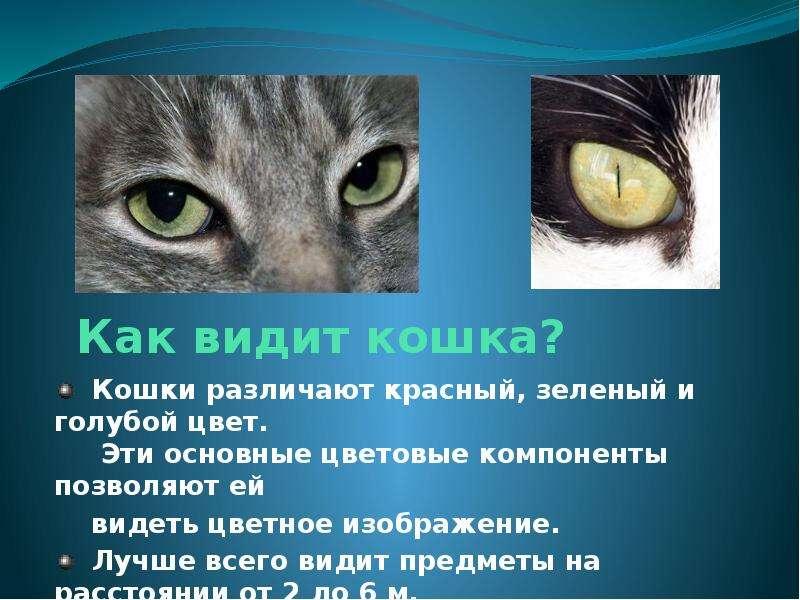 Что видит кот картинка