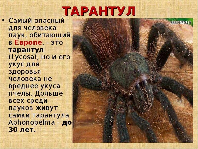 Что делать если укусил тарантул  Укусили!
