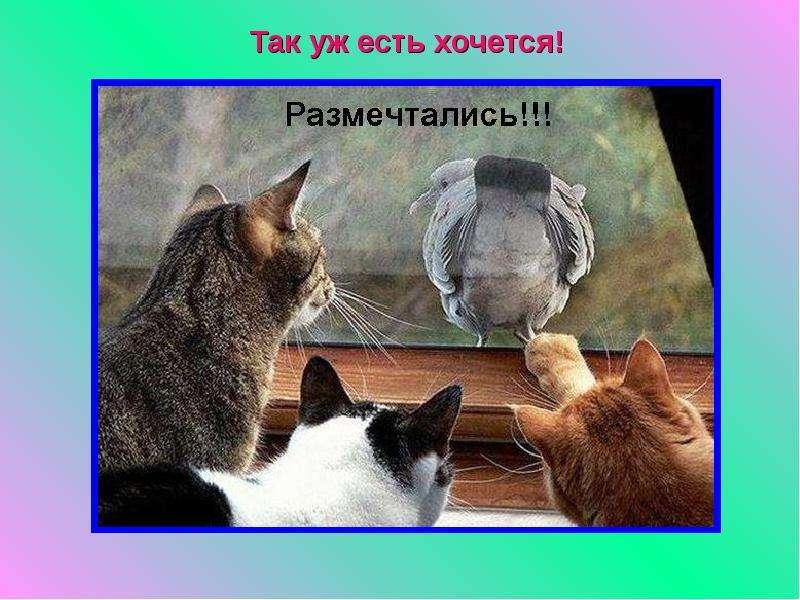 russkogo-parnya-ebut-v-popu