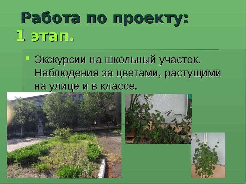 Презентация проекта мой двор