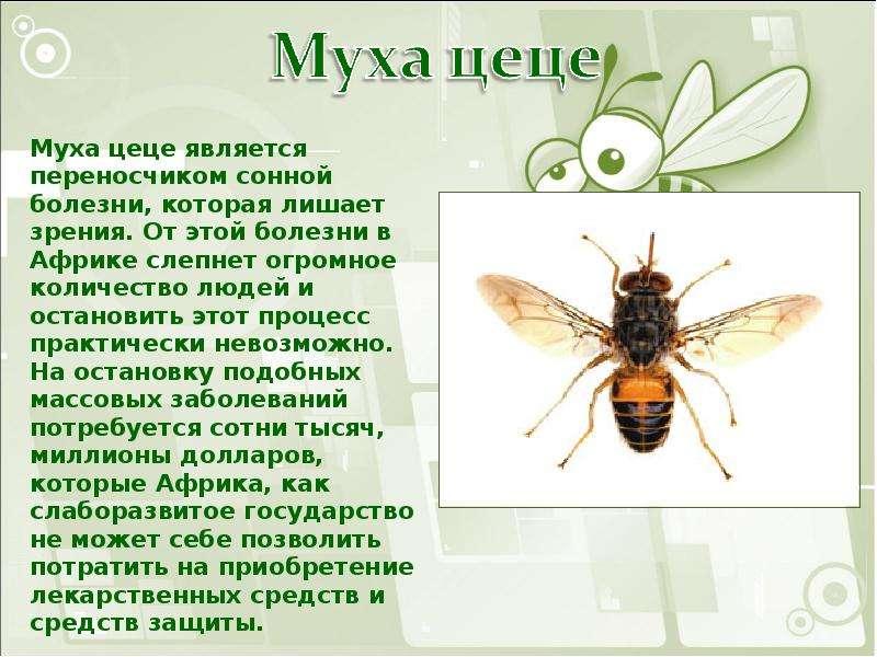доклад на тему круглые черви паразиты человека