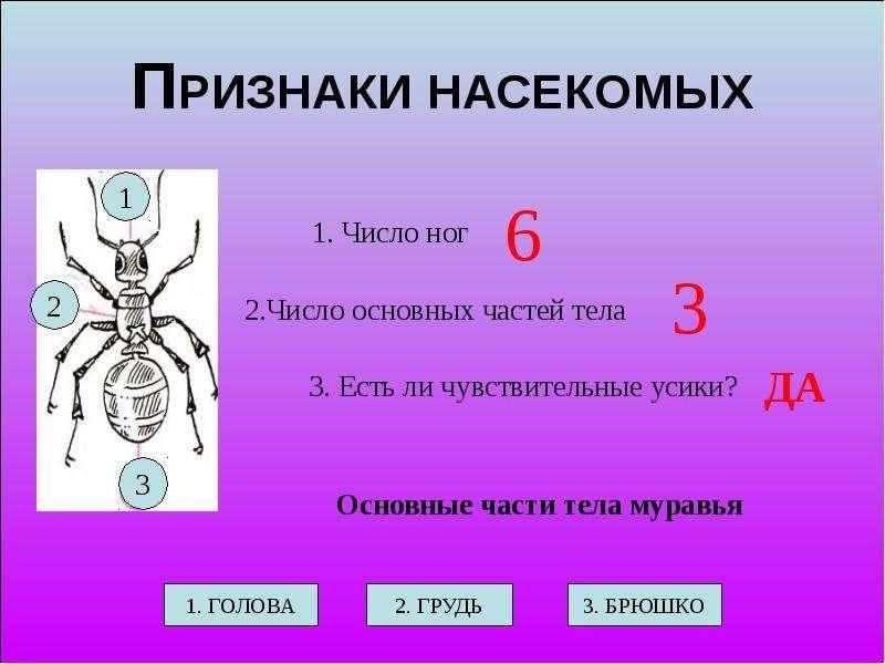 Презентация кто такие насекомые 1 класс школа россии