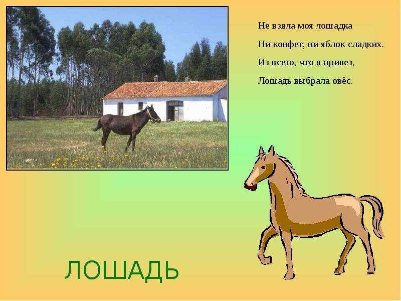 Лошадь стих короткий