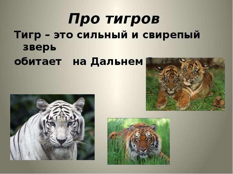 Про тигров Тигр – это сильный и свирепый зверь обитает на Дальнем Востоке