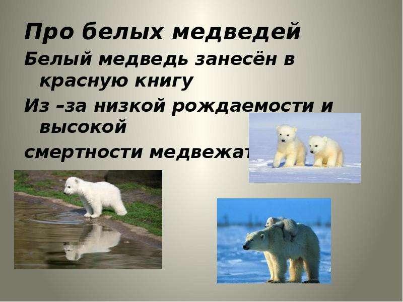 Про белых медведей Про белых медведей Белый медведь занесён в красную книгу Из –за низкой рождаемост