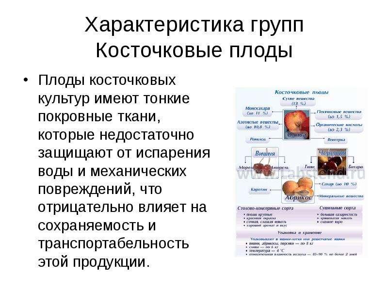 Характеристика групп Косточковые плоды Плоды косточковых культур имеют тонкие покровные ткани, котор
