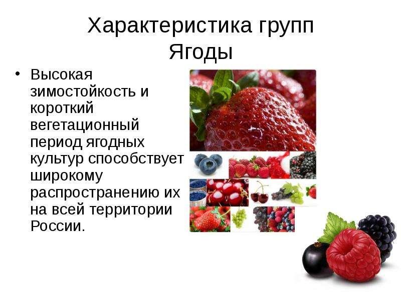Характеристика групп Ягоды Высокая зимостойкость и короткий вегетационный период ягодных культур спо