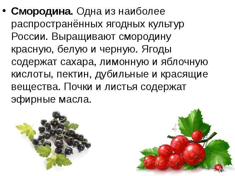 Презентация Свежие и переработанные плоды - скачать презентацию
