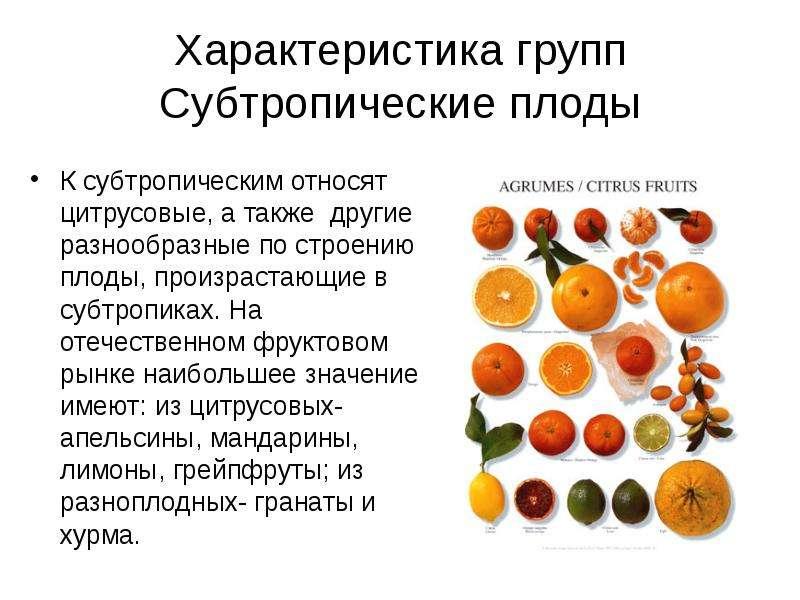 Характеристика групп Субтропические плоды К субтропическим относят цитрусовые, а также другие разноо
