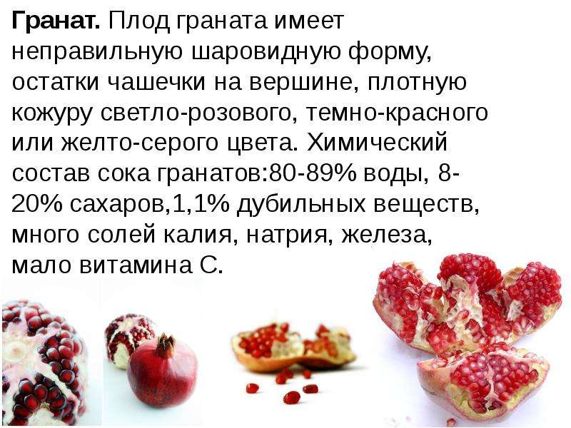 Гранат. Плод граната имеет неправильную шаровидную форму, остатки чашечки на вершине, плотную кожуру
