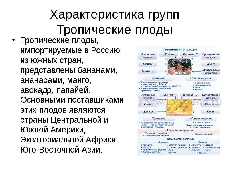 Характеристика групп Тропические плоды Тропические плоды, импортируемые в Россию из южных стран, пре