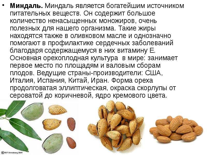 Миндаль. Миндаль является богатейшим источником питательных веществ. Он содержит большое количество