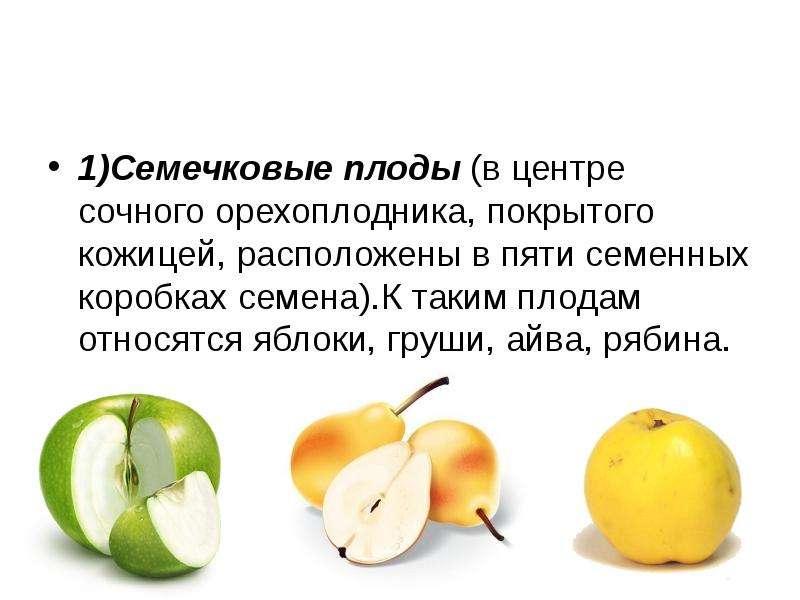 1)Семечковые плоды (в центре сочного орехоплодника, покрытого кожицей, расположены в пяти семенных к