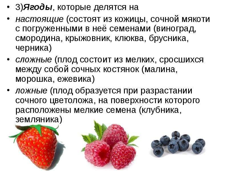 3)Ягоды, которые делятся на 3)Ягоды, которые делятся на настоящие (состоят из кожицы, сочной мякоти