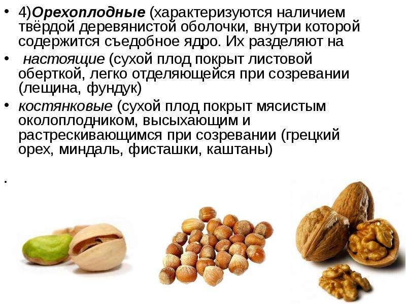4)Орехоплодные (характеризуются наличием твёрдой деревянистой оболочки, внутри которой содержится съ