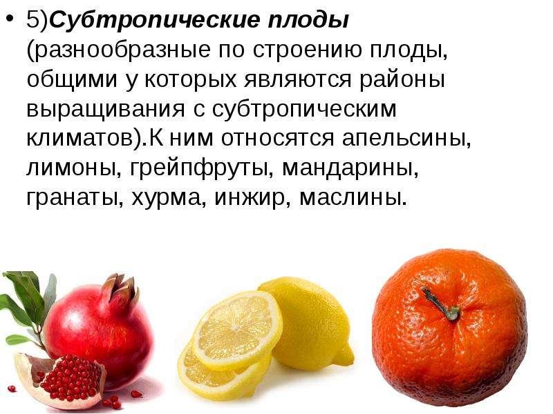 5)Субтропические плоды (разнообразные по строению плоды, общими у которых являются районы выращивани
