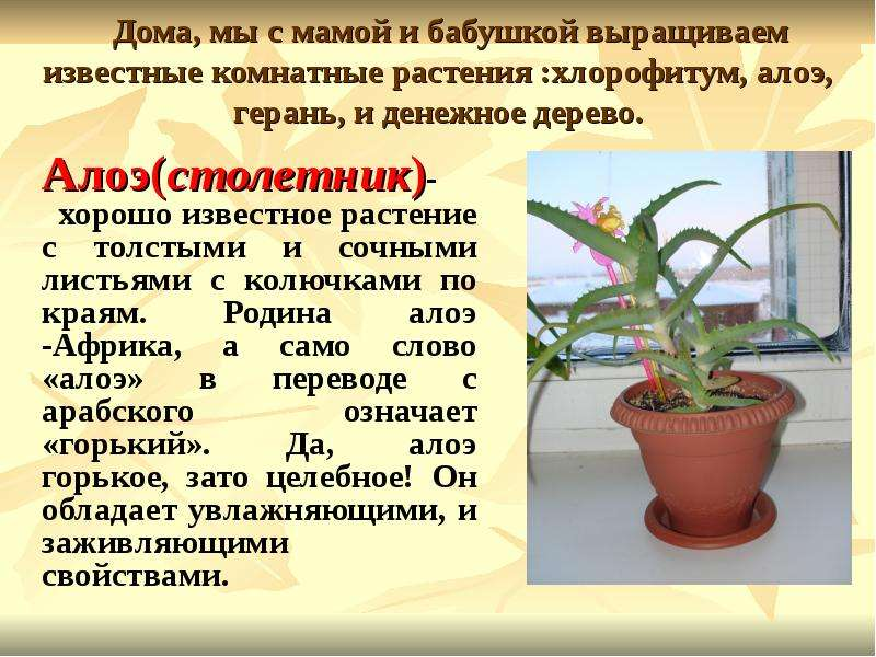 Текст комнатные растения с картинками и текстом