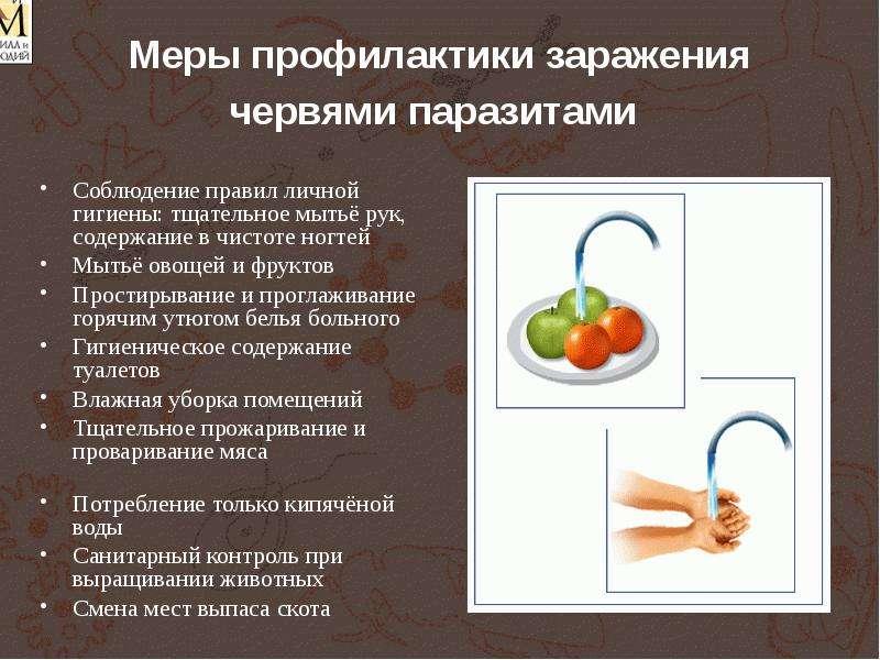 профилактика от паразитов в организме человека таблетки
