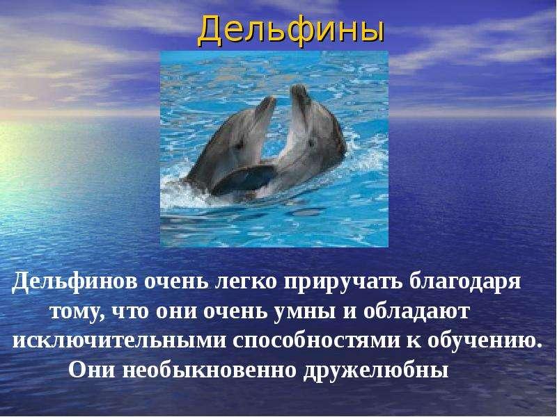 Статус про дельфина